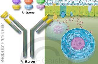 Antigene Antikörper der Darmschleimhaut Mukosa mit Mastzelle