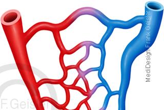 Blutgefäße Arterien Arteriolen Venen Venolen und Kapillare Blutkapillare