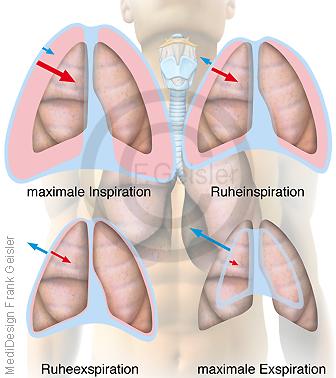 Physiologie Atmung, Atemvolumen Inspiration Exspiration der Lunge