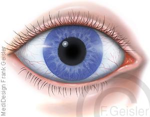 Auge Oculus mit Augapfel Bulbus oculi