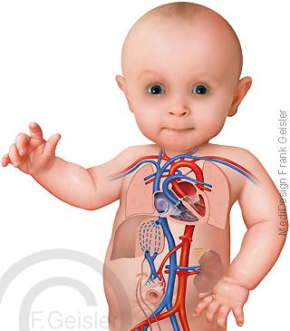 Baby, neugeborenes Kind, postnataler Kreislauf Blutkreislauf
