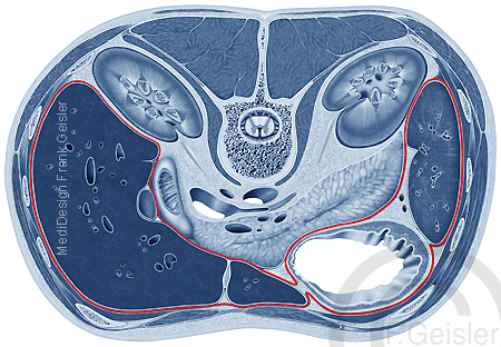 Bauchfell Peritoneum mit Organe im Bauchraum Rumpf