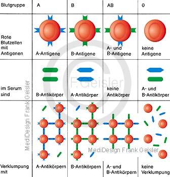 Aufbau Blut, Blutgruppen mit AB0 System