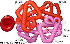 Blut, rotes Blutkörperchen Erythrozyt mit Molekül Blutfarbstoff Hämoglobin