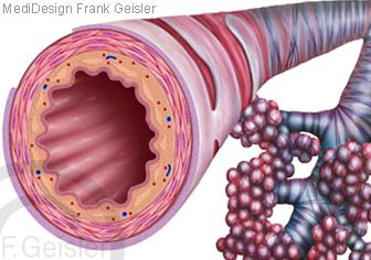 Bronchien Bronchiolen Lungenbläschen Alveolen der Lunge