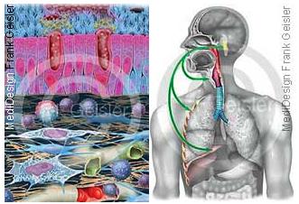 Bronchitis, Entzündung der Bronchien und Husten Hustenreiz