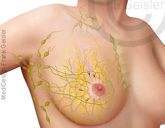 Brust der Frau, Lymphe Lymphbahnen und Lymphknoten