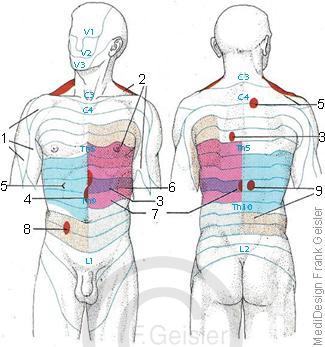 Dermatome der Haut, segmentale Hautfelder Heead-Zonen