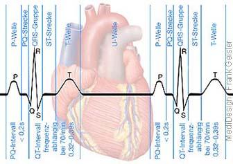 Physiologie EKG Elektrokardiogramm Elektrokardiographie Herz