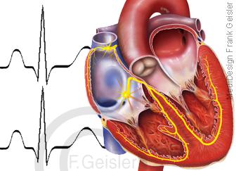 Physiologie EKG Herz Erregung Erregungsleitung