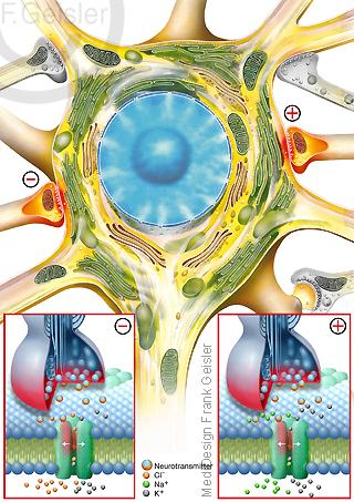 Neurologische Erkrankung Epilepsie, eleptischer Anfall, Nervenzelle Neuron mit Synapsen