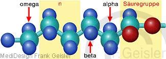 Molekül Fett Fettbausteine Fettsäure
