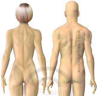 Oberflächenanatomie Frau Mann Ansicht von dorsal