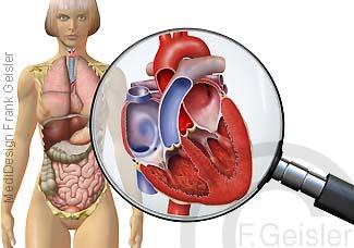 Organe Frau von vorn, Anatomie Ansicht Herz
