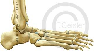Anatomie Knochen Fuß Fußskelett mit Fußgelenk