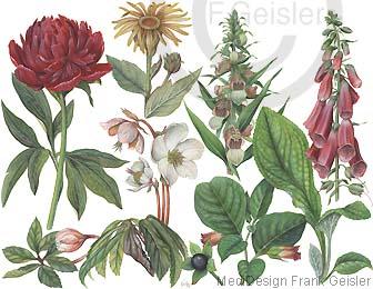 Heilung durch Heilpflanzen in der Pflanzenheilkunde Phytotherapie