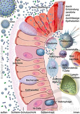 Immunsystem des Menschen, Immunreaktion der Schleimhaut