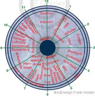Iris Irisdiagnose Irisdiagnostik bei Erkrankungen der Organe des Menschen