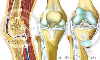 Anatomie Knie mit Kniegelenk Articulatio genus