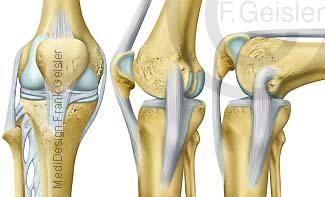 Funktion Bewegung Knie, Kniegelenk mit Kniescheibe Patella und Bänder