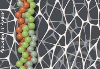 Kollagen mit Triple-Helix-Molekül, Collagen-Helix im Bindegewebe