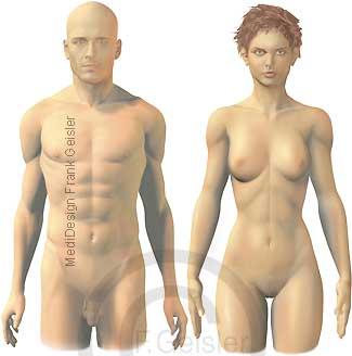 Oberflächenanatomie Mann und Frau Ansicht frontal