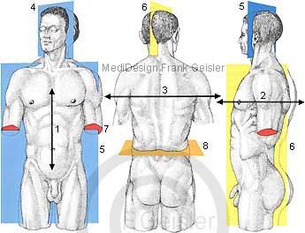 Anatomie Mensch, Körper Achsen und Ebenen