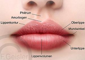 Mund mit Lippen, Lippe Labium oris der Frau