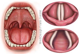 Mund Rachen, Husten Tissus Hustenreflex Stimmritze