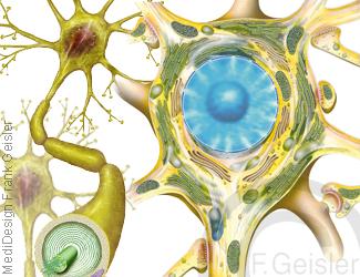 Nerv Neuron, Nerven Nervenzellen Nervengewebe