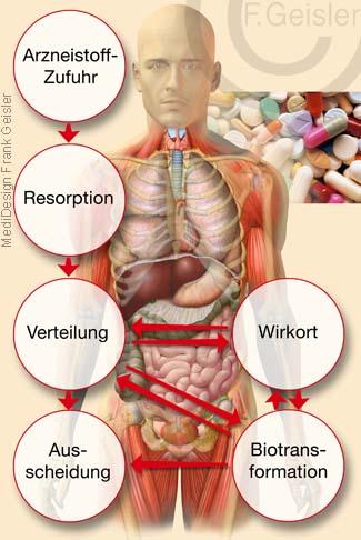 Pharmakokinetik, Wirkung Arzneistoffe der Arznei Arzneimittel Medikament auf Organismus