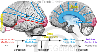 Physiologie Gedächtnis Erinnerung des Menschen, integrative Leistungen ZNS Gehirn