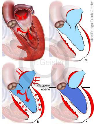 Physiologie Herz, Blutkreislauf Pumpfunktion Systole