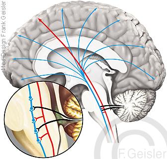 Physiologie ZNS Mensch, Sensorik im Gehirn Hirnstamm Formatio reticularis