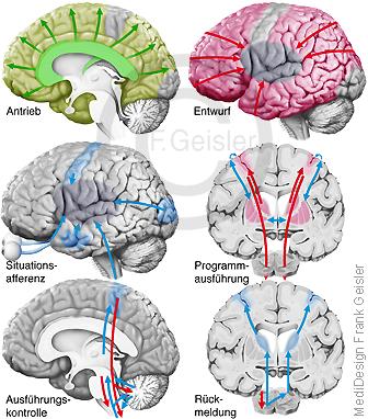 Physiologie des Menschen, integrative Leistungen ZNS Gehirn