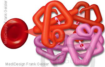 Rote Blutzelle Erythrozyt mit Blutfarbstoff Hämoglobin