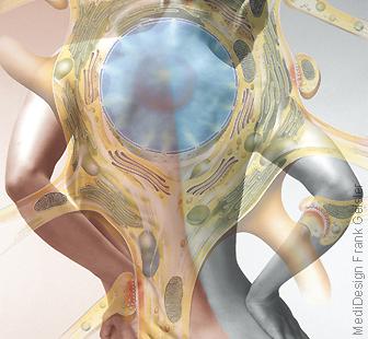 Rücken mit Wirbelsäule, Schmerz Schmerzen Rückenschmerzen am Rücken