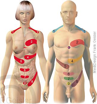 Schmerz Schmerzzonen Headsche-Zonen, Head-Zone Körper Haut