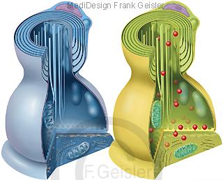 Synapse passiv aktiv, Endkopf von Neurit, Kontakt zu Nervenzelle Neuron