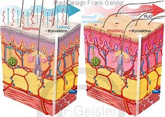 Reguation Thermoregulation der Haut des Menschen bei Kälte und Wärme