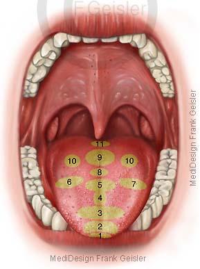 Zunge Zungendiagnose Zungendiagnostik zur Diagnose erkrankter Organe
