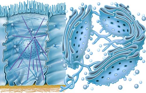 Aufbau der Zelle, Zytologie Zellbiologie Zellenlehre der Zelle von Frank Geisler