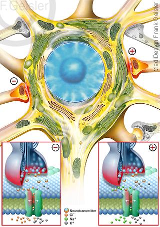 Epilepsie, Nervenzelle Neuron mit Synapse